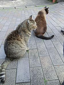 猫伊万里_.jpg